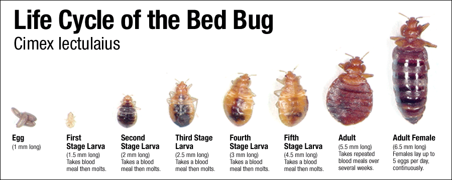 Faqs The Bed Bug Guys
